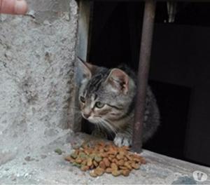 Dolcissimo gattino in adozione!