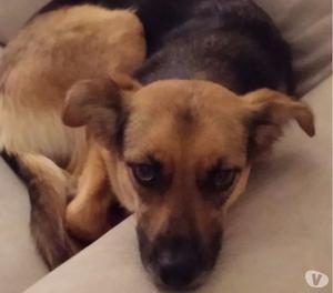 Regalo cagnolina di quattro anni, taglia media