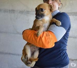 Roslyn, 3 anni, 5 kg, aspetta una famiglia in canile