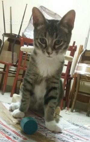Gattino di tre mesi