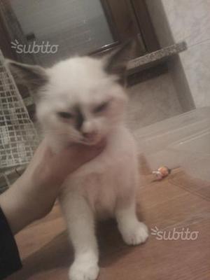 Regalo gatto