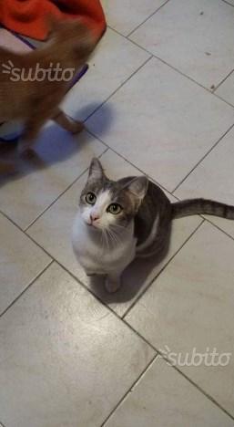 Rossella gatta di 1 anno sterilizzata