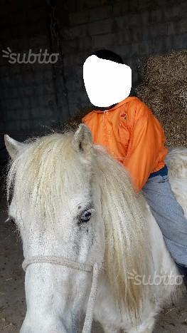 Pony femmina shettland