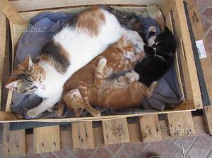 Ultimo gattino bianco e arancio