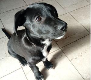BLACK, dolcissimo cucciolo, cerca adozione