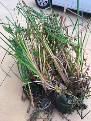 piante acquatiche posot class