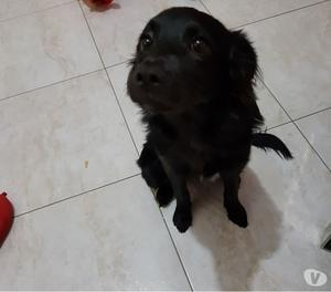 Regalo cucciolo di 6 mesi incrocio tg medio piccola