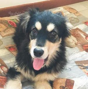 Cucciolo taglia medio grande in adozione