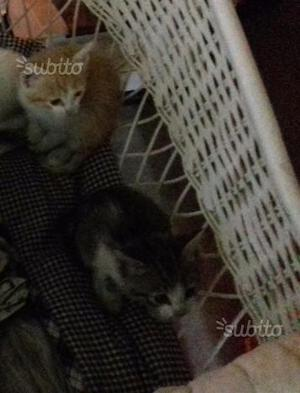 Gattini in regalo
