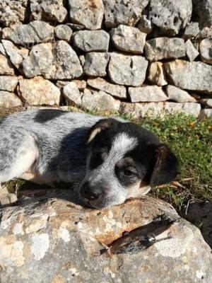 Cucciola di 2 mesi in adozione