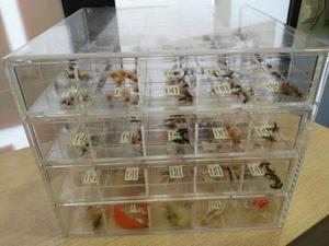 Cassettiera mosche per la pesca a mosca daiwa