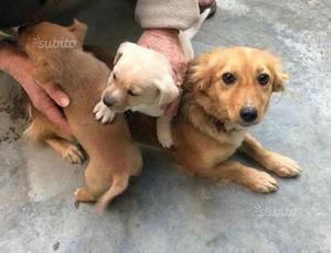 Cuccioli di due mesi taglia piccola