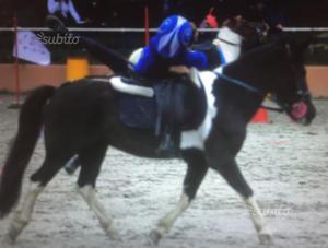 Pony pezzato