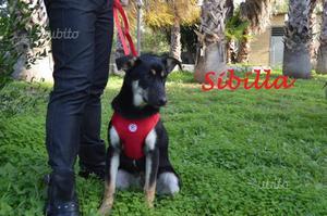 Sibilla.cucciola adorabile
