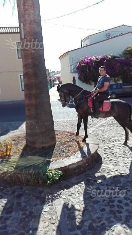 Cavallo intero 3 anni