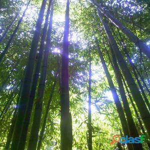 Canne di bambu colorate vari diametri alte cm posot class for Vendita bambu