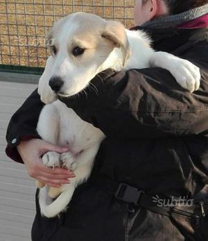 Regalo:Sandra cucciola di tre mesi. Femmina
