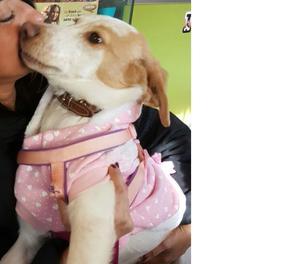 Marta cucciola di 6 mesi taglia media contenuta Vetrina