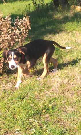 Penny, 5 mesi cagnolina
