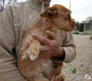 Dixie spinoncino taglia piccola 2,5 anni cerca casa