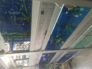 Vasche vetroresina per allevamento pesci o anatre posot for Vasca per anatre