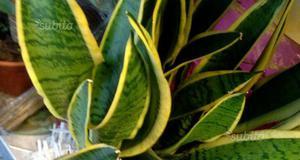Piccole piante da giardimo