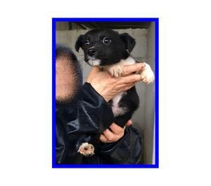 GUFETTA cucciola 3 mesi unica sopravvissuta in canile