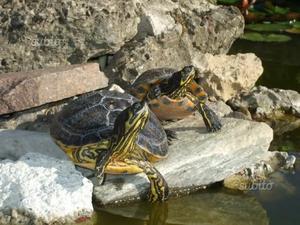 Laghetto per tartarughe posot class for Filtro acqua tartarughe
