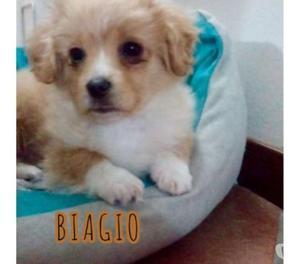 Biagio cucciolo di 3 mesi