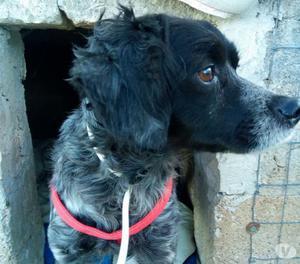 EVA cagnolina Breton nata per amare e non per cacciare
