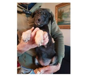 Carol, tre mesi cucciola in adozione