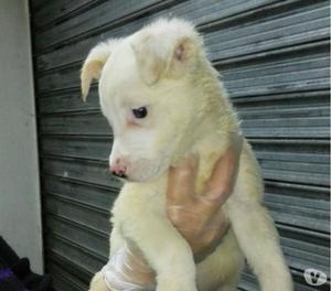 KAYLA, cucciola cerca adozione