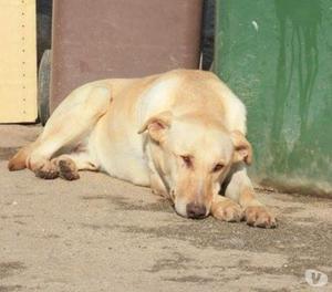 Adozione del cuore per Oky, cane di 3 anni,crisi epilettiche