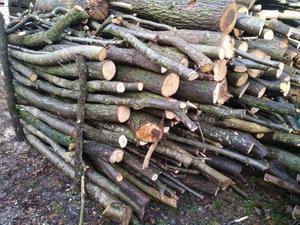 Regalo legna tagliata da ardere a chi la posot class for Regalo a chi se lo viene a prendere