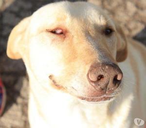 Oky, dolce cane di 3 anni per voi!
