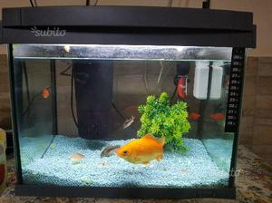 Pesci e sala parto posot class for Sala parto pesci
