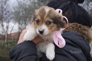 Carlotta cucciola taglia piccola