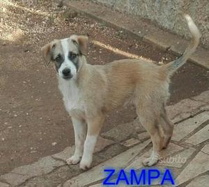 Zampa stupendo cucciolo di 3/4 mesi