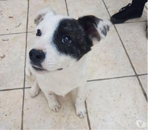 ZAC, cucciolo tenerissimo cerca adozione