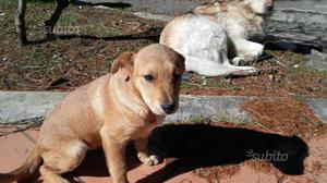 Regalo cucciola di cane