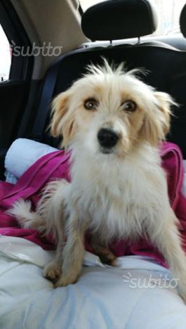 Tenera cagnolina di 1 anno e 1/2 in adozione