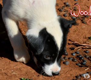 Woody 3 mesi taglia medio contenuta