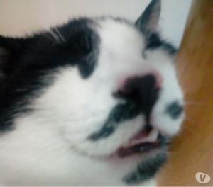 Jolly il gattino smarrito
