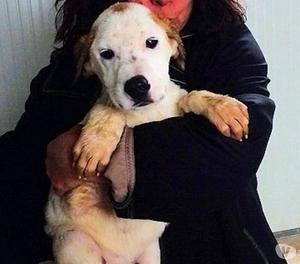 MOMOH cucciolo medio grande bellissimo, espressivo