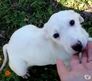 BARBIE, cucciola cerca adozione