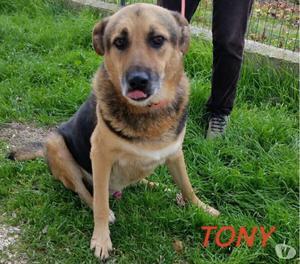 TONY, bello dolce e affettuoso