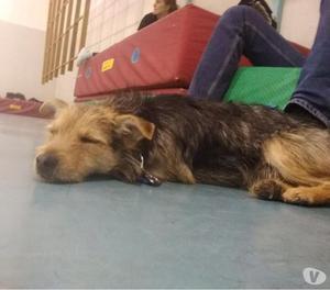 Marley cagnolino taglia piccola 1 anno e 5 kg