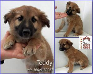 Teddy: meraviglioso cucciolo di circa 2/3 mesi