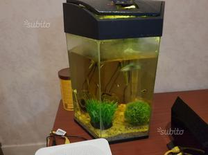 Acquario 120 litri allestito con guppy posot class for Acquario 120 litri