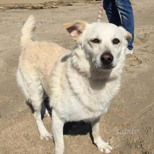 BIANCA (cagnolina dolcissima di 3 anni)